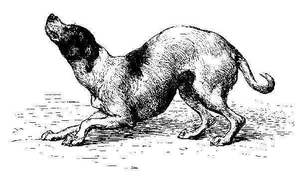 Las jerarquías por dominancia en #perros no implican agresión. Estudio científico.