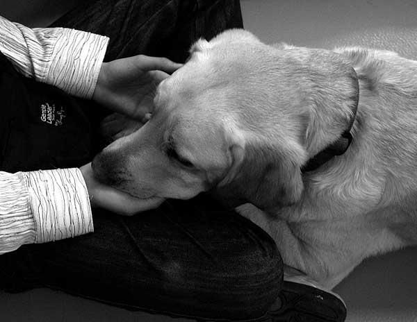 Disfunción cognitiva en perros,