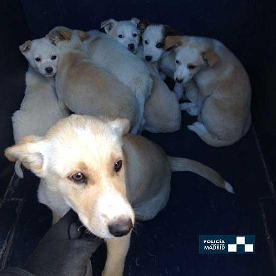 Hasta el 31 de julio pasado se han mostrado en la web de adopción municipal de MAdrid 401 animales y han sido 371 los que han conseguido un nuevo hogar.