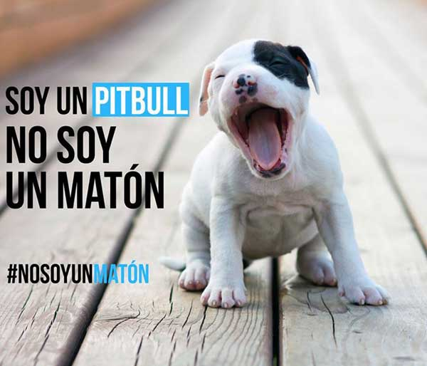 Campaña #NoSoyUnMaton de @LiberaONG. Entre todos podemos demostrar que un pitbull no es un matón, sino un perro más.
