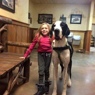 "Perro de servicio: ""George"", un gran danés propiedad de Rachel Burton de Woburn, Massachusetts."