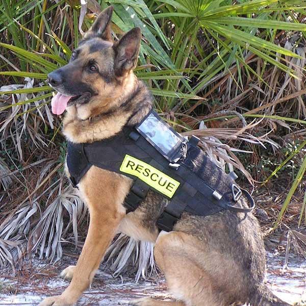 """Perro de Búsqueda y rescate: """"Ty"""", un pastor alemán manejado por Melissa Frye de Southport, Florida."""