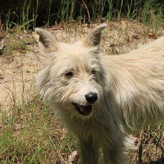 19 de diciembre, día de la adopción en Kiwoko. 10 animales se adoptan cada día.