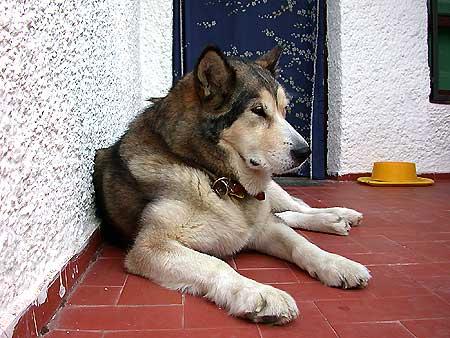 Relación entre ejercicio y ansiedad y miedo en #perros.