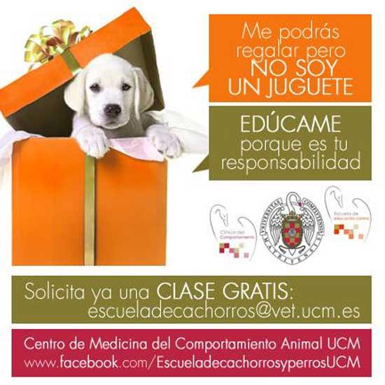 Escuela de cachorros de la UCM, clase gratis