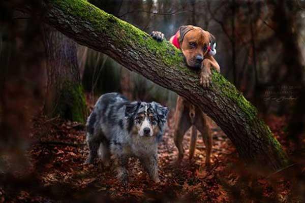 Fotografía de perros con Ina Gerhard, creando atmósferas con mucha sensibilidad y calidad.