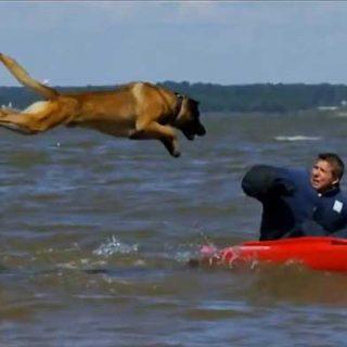 K9 Guardians: Documental de entrenamiento de #perros de protección.