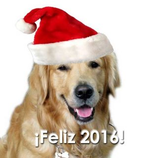 Empezamos el año con los 10 mejores vídeos navideños (de #perros).