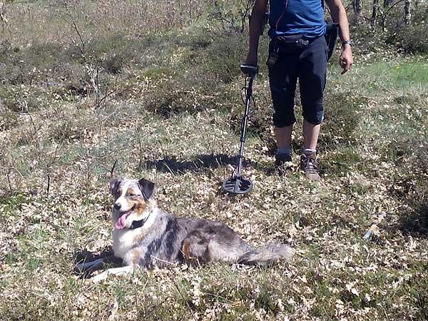 #Perros detectores... De meteoritos. Kaly es la primera perra detectora de cuerpos celestes.