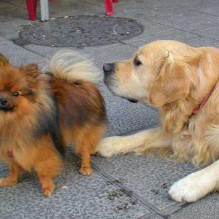 Las razas de #perros no se comportan igual unas que otras, y las más agresivas son... (te sorprenderá este estudio sobre una muestra de 13.000 perros).