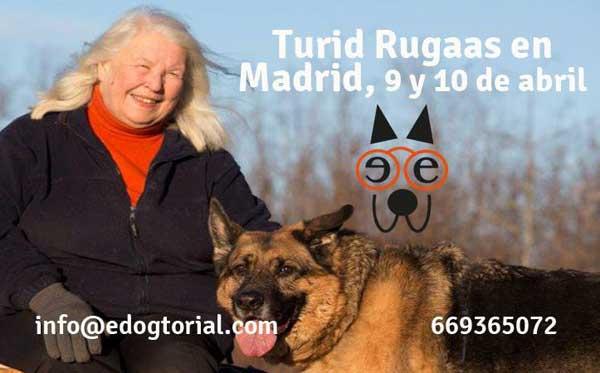"""Seminario de Turid Rugaas en Madrid (doble): """"Introducción del perro rescatado en su nuevo hogar"""" y """"Resolución de problemas""""."""