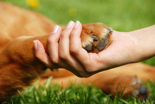 El cepillado de los perros es amistad. Y otros 5 momentos que estrechan lazos.