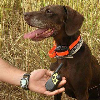 Escocia pregunta a la población sobre el uso de collares eléctricos en el #adiestramiento de los #perros.