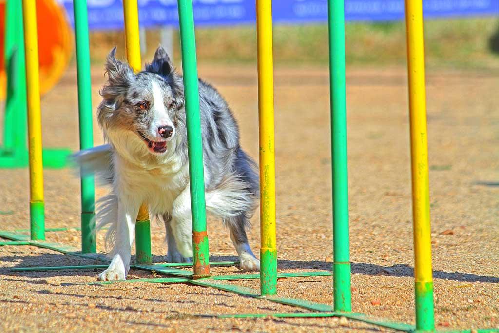 Deporte-perros