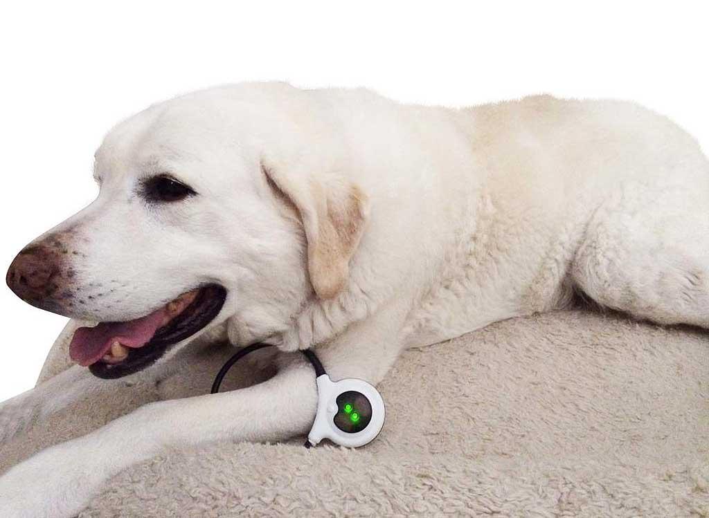 Nuevo dispositivo que permite aliviar el dolor de los perros