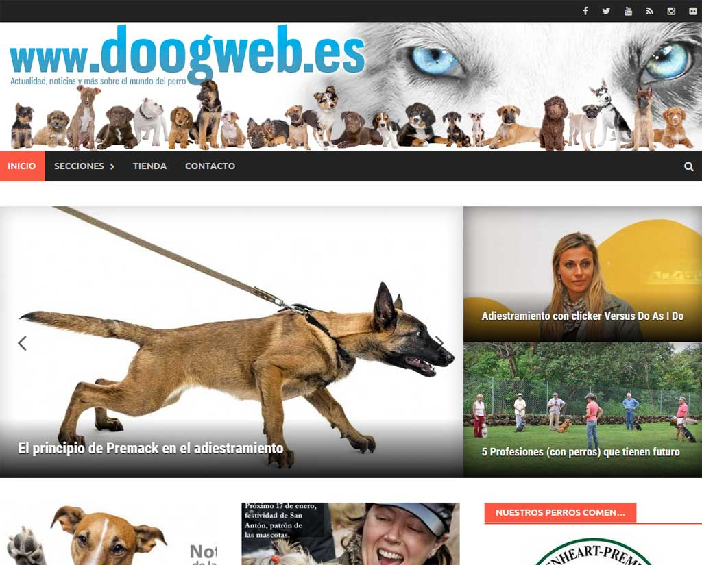 Doogweb-V2-ok