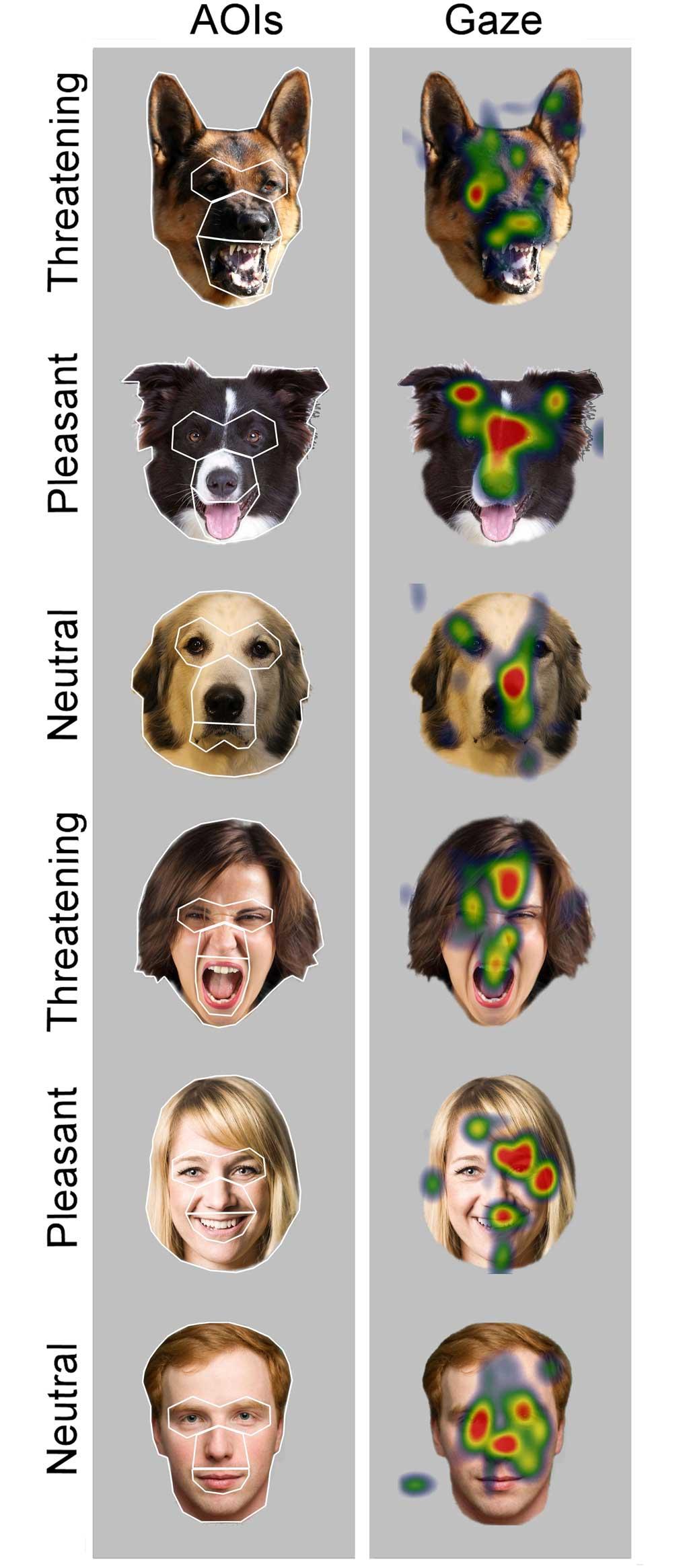 Emocines-humanos-perros2