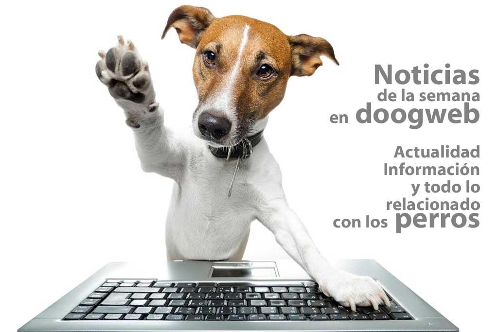 Noticias_perros2016