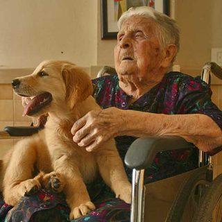 Análisis de la situación en España de la Intervención asistida con animales (IAA)