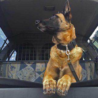 Reja separadora para perros en el coche.