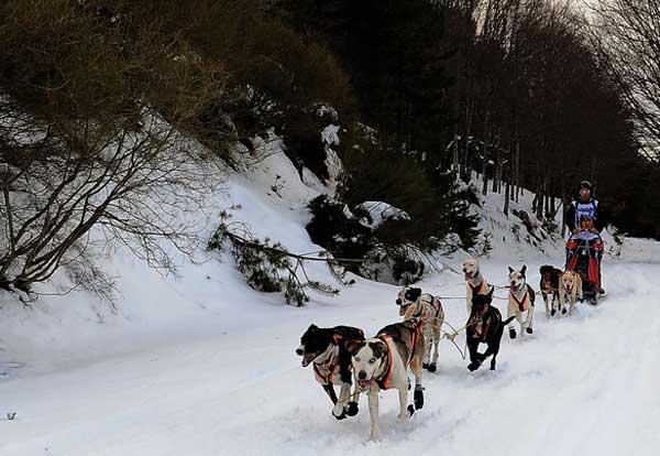 Soria Unlimited 2016, la prueba internacional de trineo con perros que discurre por las sierras de Urbión y Cebollera y que aglutina deporte, aventura, naturaleza y promoción turística.