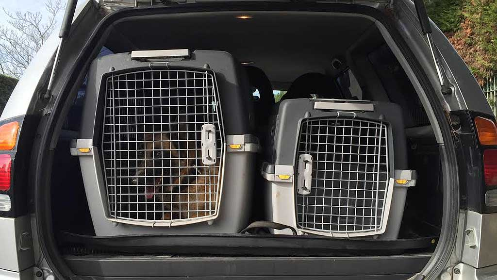 transportin-perros