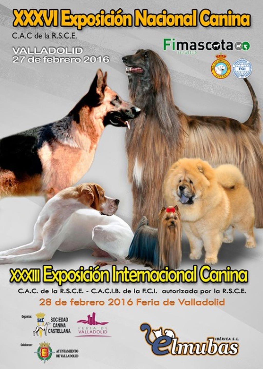 Perros de más de 100 razas participan en la 36ª Exposición Nacional Canina de Valladolid