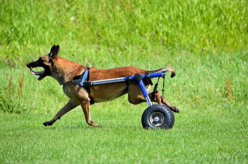 Cómo fabricar una silla de ruedas para perros