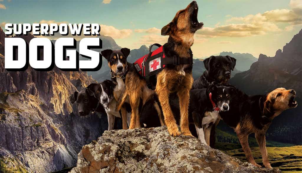 """SuperPower Dogs, la película de perros detectores y sus """"súper poderes"""", ya está en preproducción"""