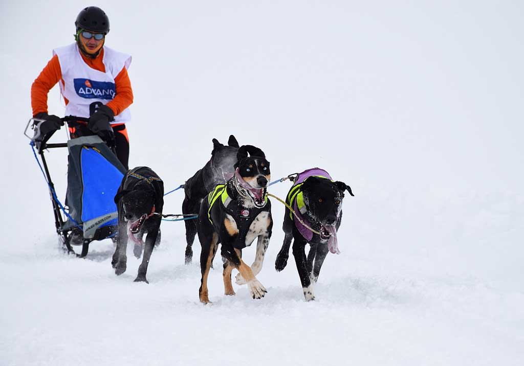Baqueira-Mushing1