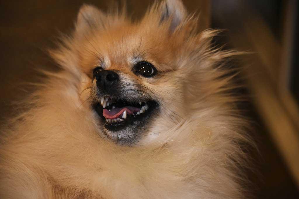 Perro-feliz