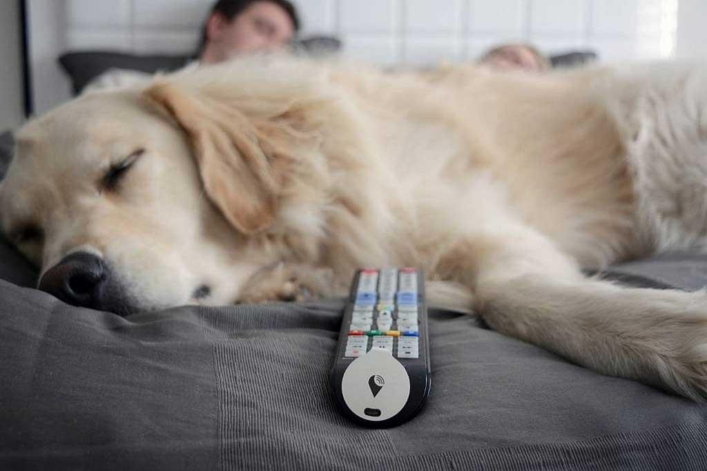 TrackR_bravo-perro
