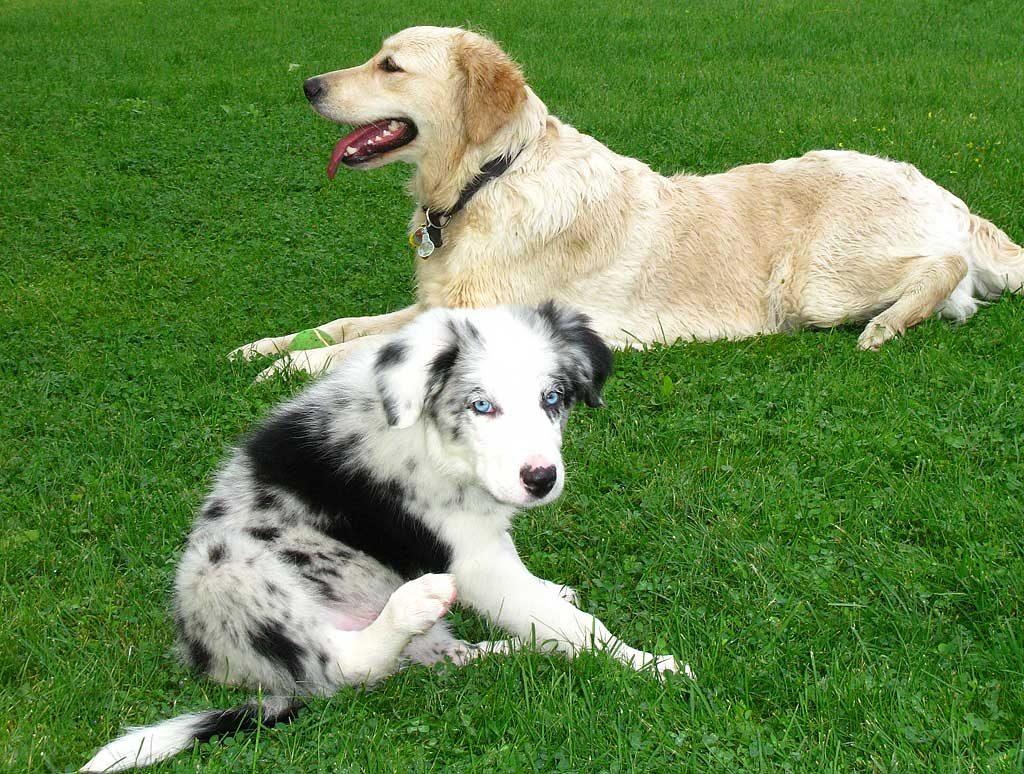 Educar-cachorros