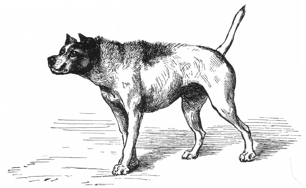 Perro reactivo o perro agresivo.
