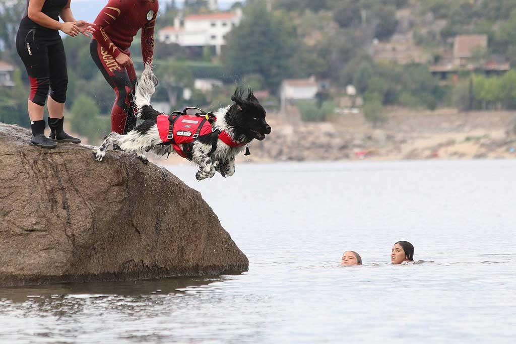 Rescate-acuatico-perro