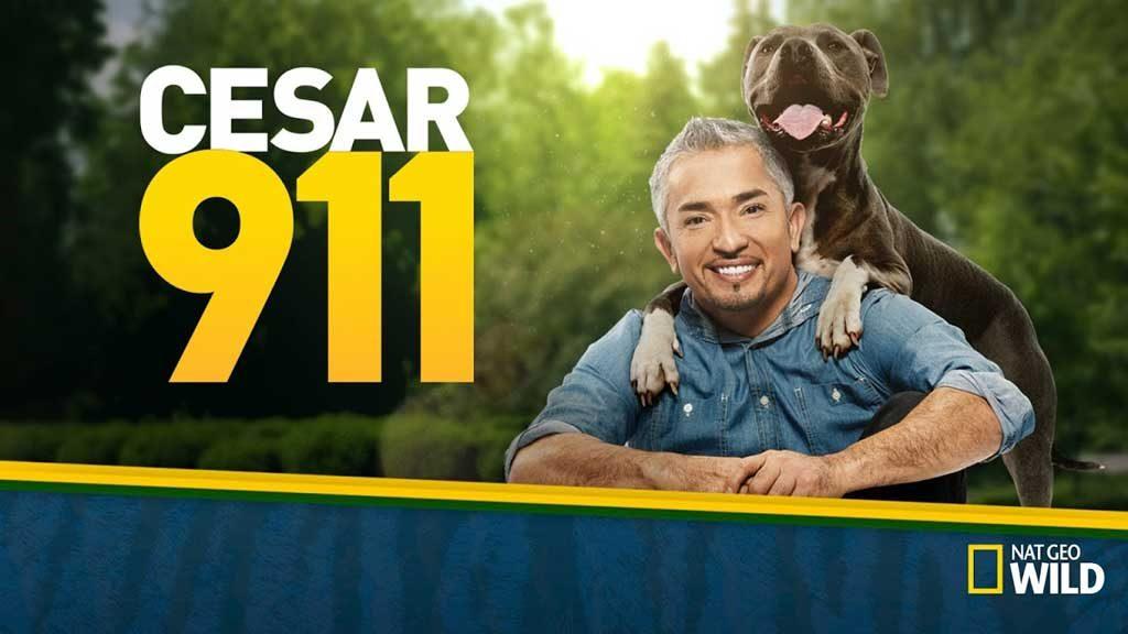 César 911 es el nuevo programa de César Millán para el canal norteamericano Nat Geo Wild.