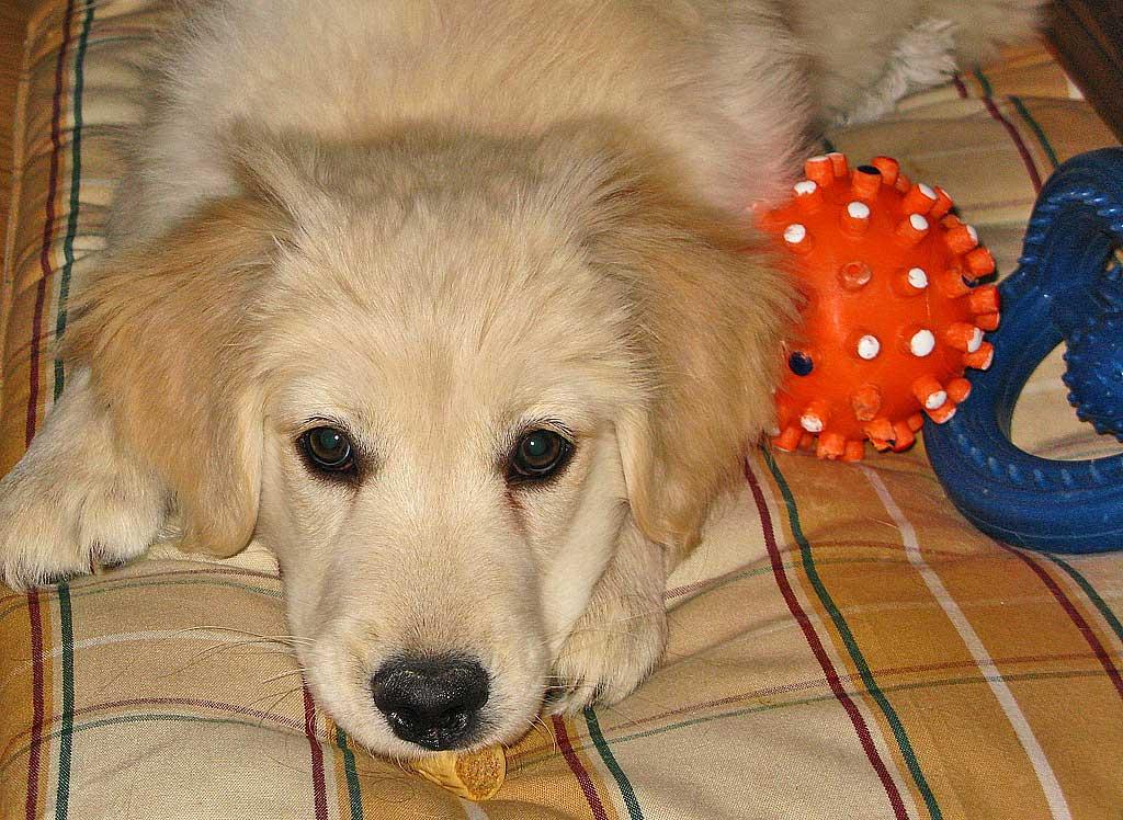 Espacio-casa-perro