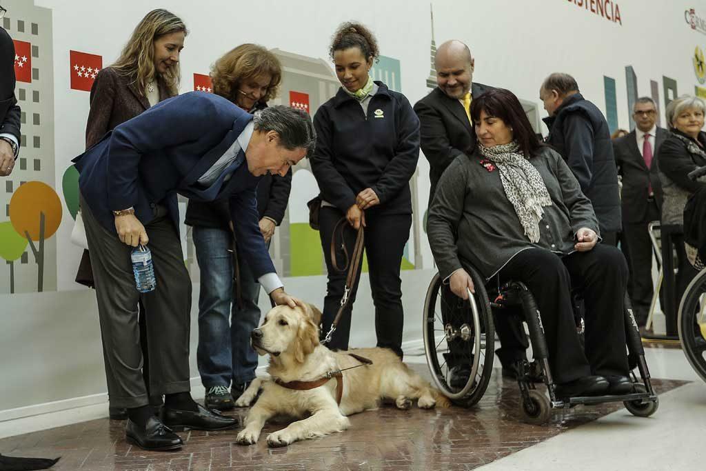 Perro-asisitencia-Madrid