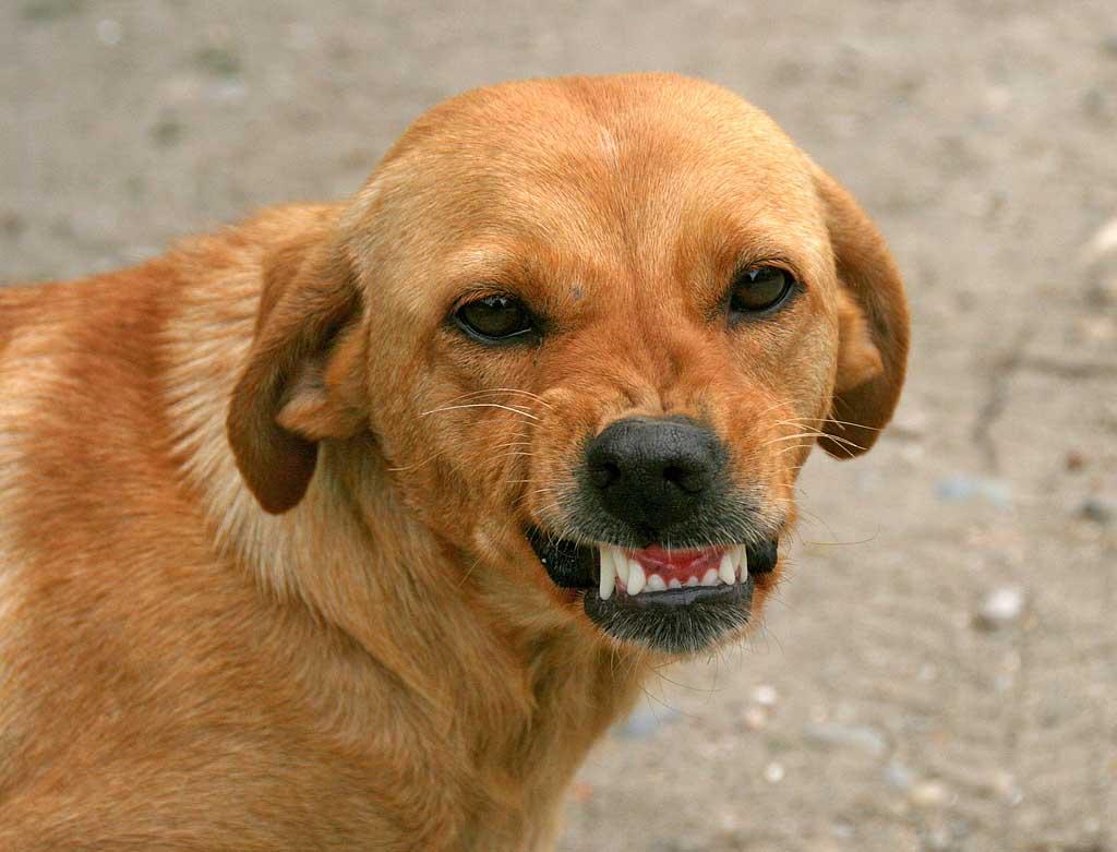Agresividad-canina