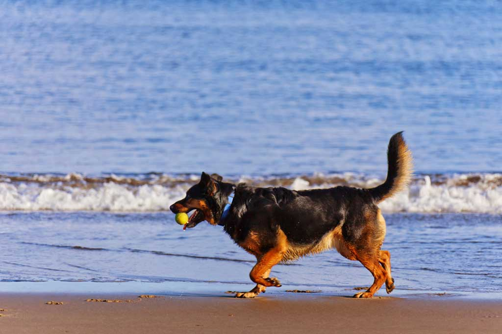 Perro-playa-verano