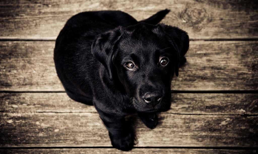 Suplementos-perros