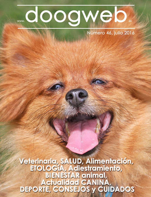 Revista gratis doogweb nº 46, julio 2016