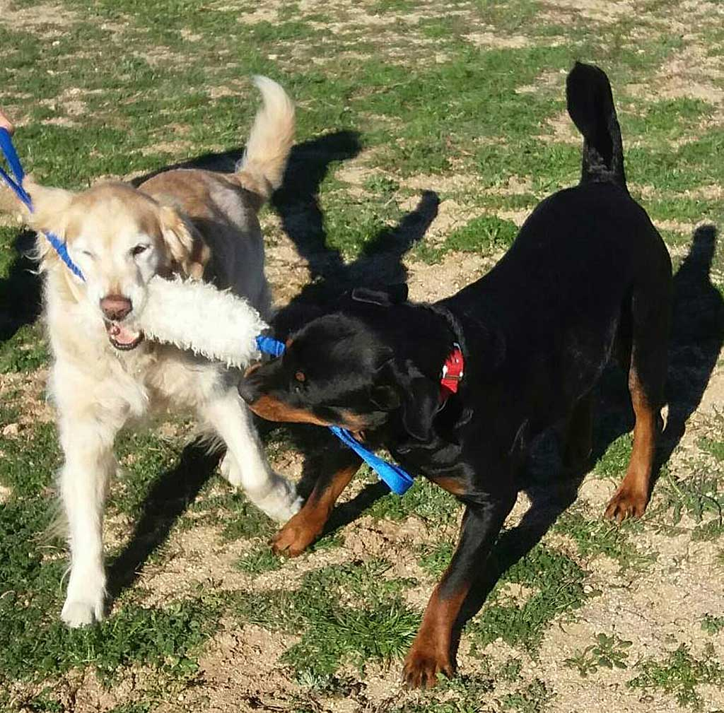 Los refuerzos para los perros varían, pero hay reglas comunes