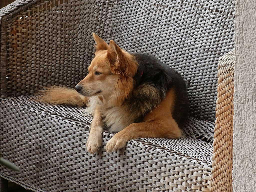 Los perros solos en casa pueden estar bien si cumplimos algunas pautas