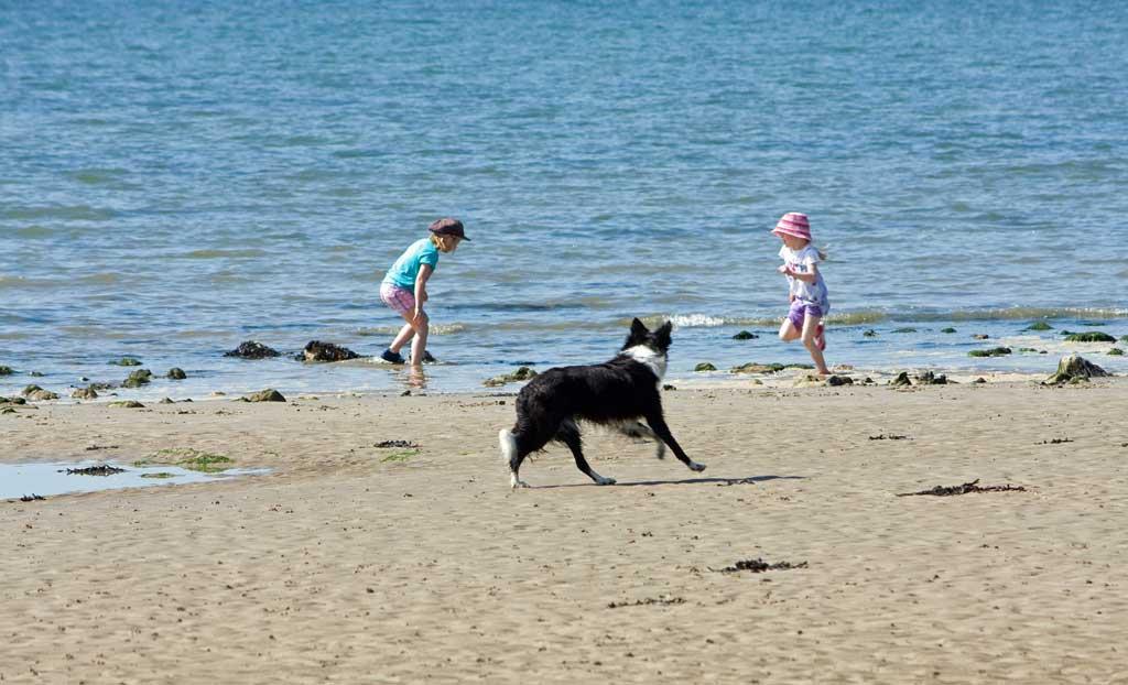 Peligros que podemos encontrar en las playas para perros.