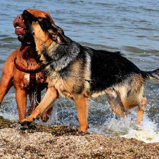 Problemas con los perros en vacaciones