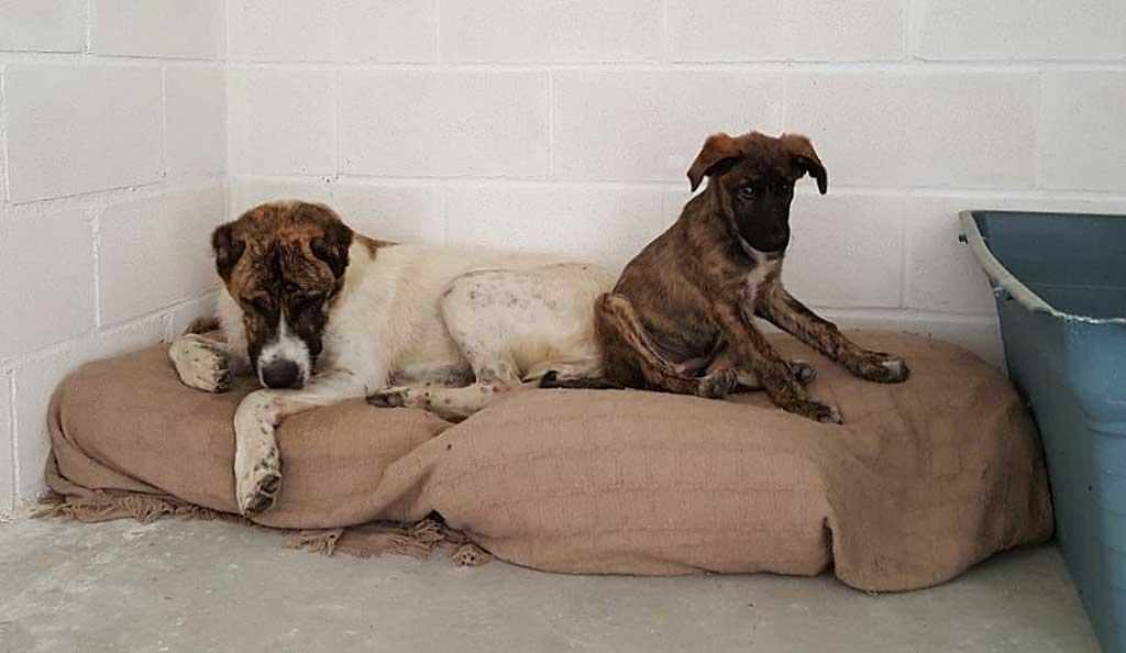El Arca de Noé de Córdoba recoge junto a unos contenedores a una perra de gran tamaño junto a su cría de 3 meses