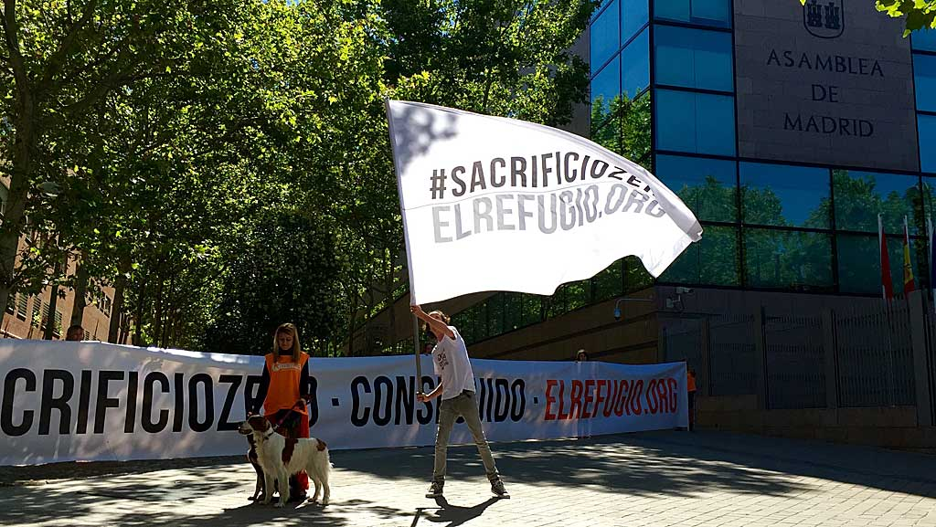 Prohibido sacrificar perros y gatos abandonados en Madrid.
