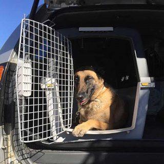 En los viajes en coche, los transportines para perros ganan por goleada.