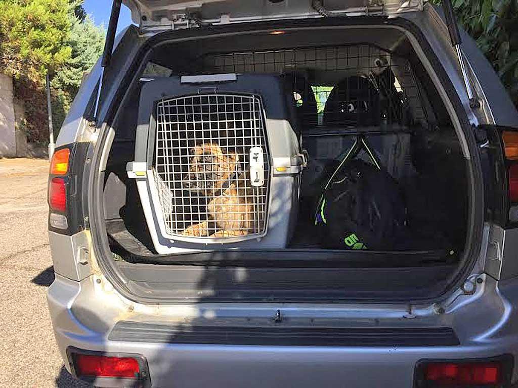 Eligiendo el tamaño adecuado de transportín, hasta con un perro grande nos quedará maletero...